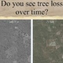 Image for Tinder style app lets citizen scientists further understand deforestation